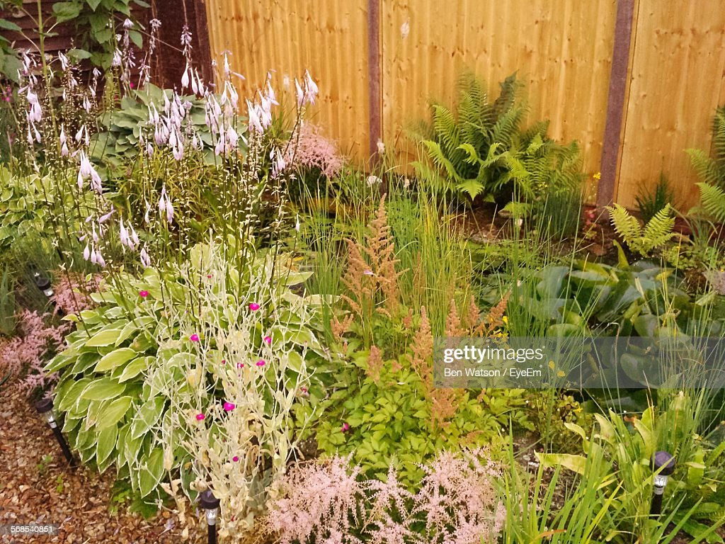 High Angle View Of Plants And Flowers Growing In Lawn : Stock Photo