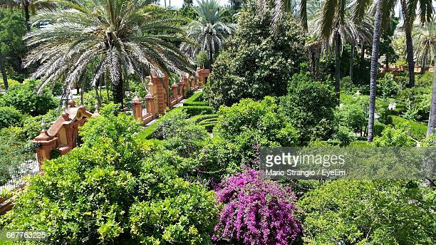 high angle view of plants and trees growing at park - jerez de la frontera stock pictures, royalty-free photos & images