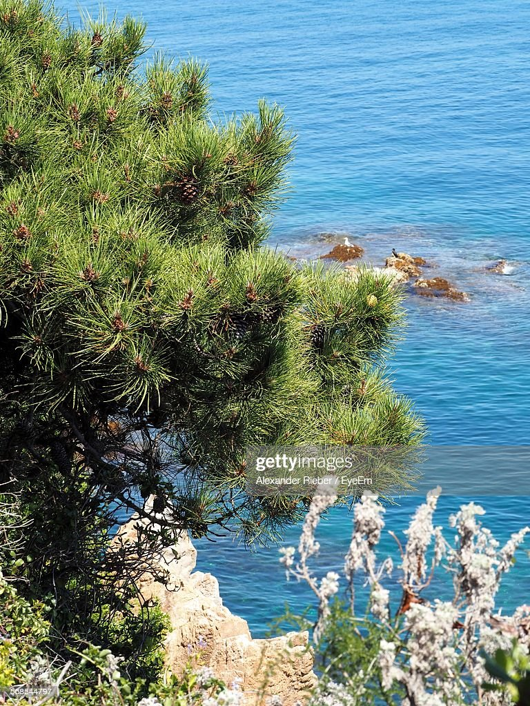 High Angle View Of Plants And Trees Growing On Shore : Stock Photo