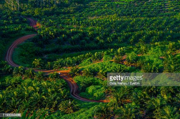 high angle view of plants and trees in forest - kalimantan stock pictures, royalty-free photos & images