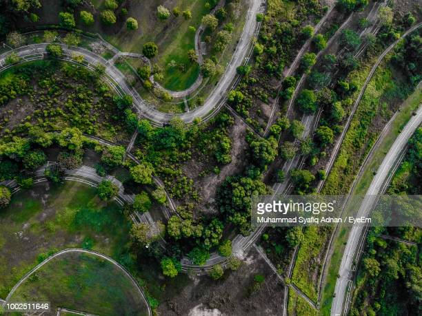 High Angle View Of Plants And Trees In Garden