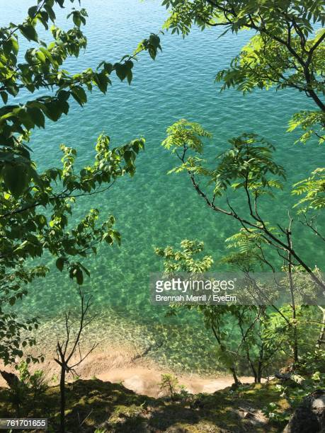high angle view of plants by lake - munising michigan stock pictures, royalty-free photos & images