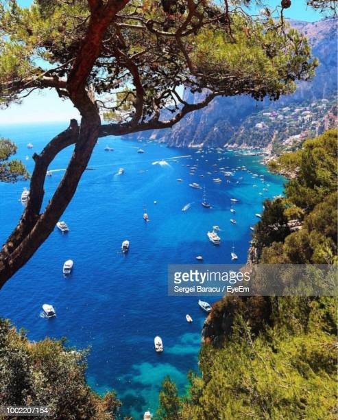 high angle view of plants by sea against sky - capri stock pictures, royalty-free photos & images