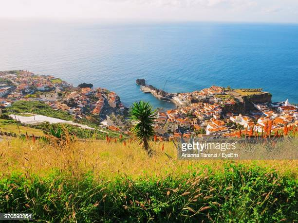 high angle view of plants by sea against sky - funchal stock pictures, royalty-free photos & images