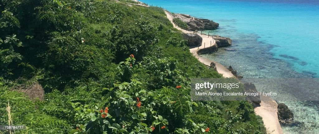 High Angle View Of Plants By Sea : Stock Photo