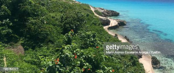 high angle view of plants by sea - isla mujeres ストックフォトと画像