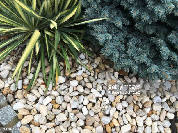 High Angle View Of Plants Growing By Pebbles In Yard