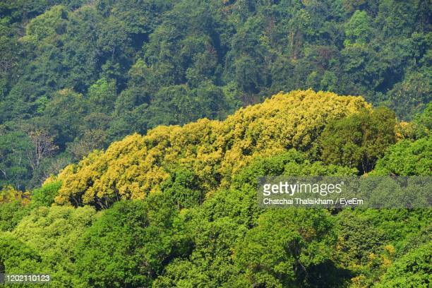 high angle view of plants growing in forest - chatchai thalaikham stock pictures, royalty-free photos & images