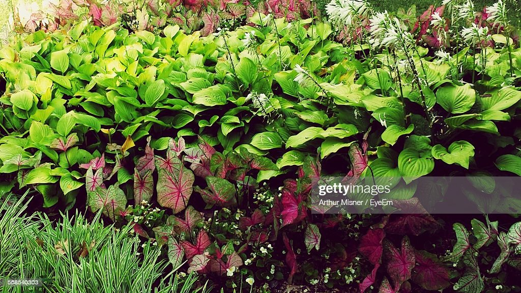 High Angle View Of Plants Growing In Park : Stock Photo