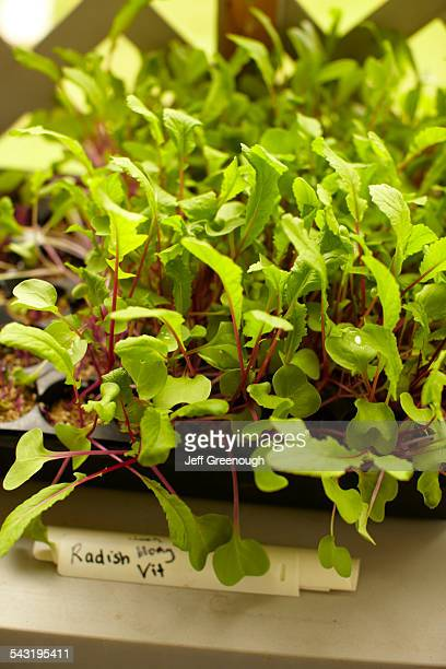 high angle view of plants growing in tray - blacksburg stock pictures, royalty-free photos & images