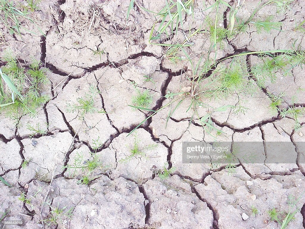 High Angle View Of Plants Growing On Drought Land : Stock Photo