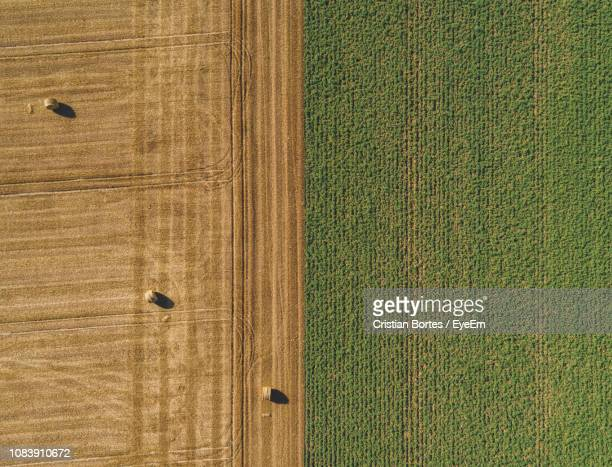 high angle view of plants growing on field - cultivated land stock pictures, royalty-free photos & images