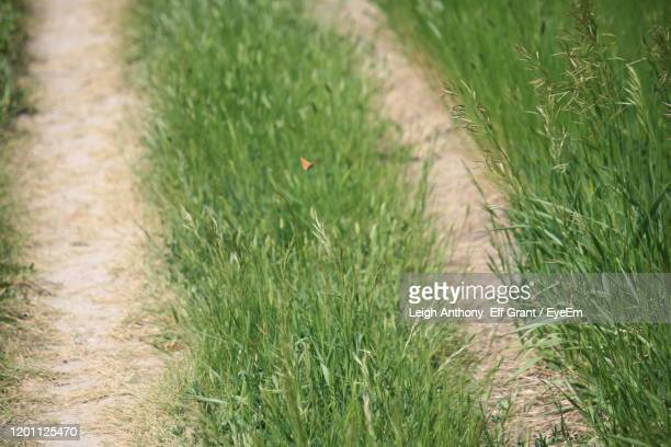high angle view of plants growing on field - leigh grant stock pictures, royalty-free photos & images