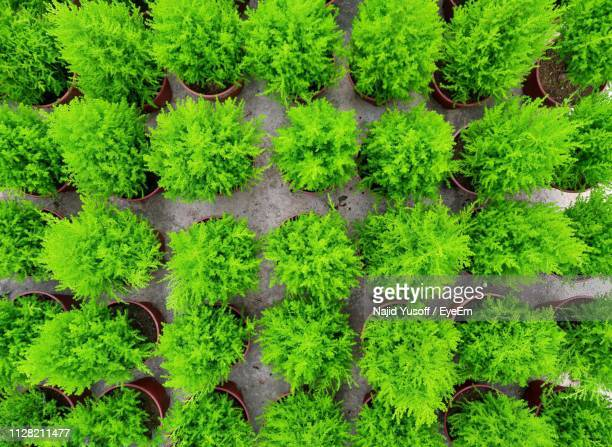 high angle view of plants growing on land - najid yusoff stock pictures, royalty-free photos & images