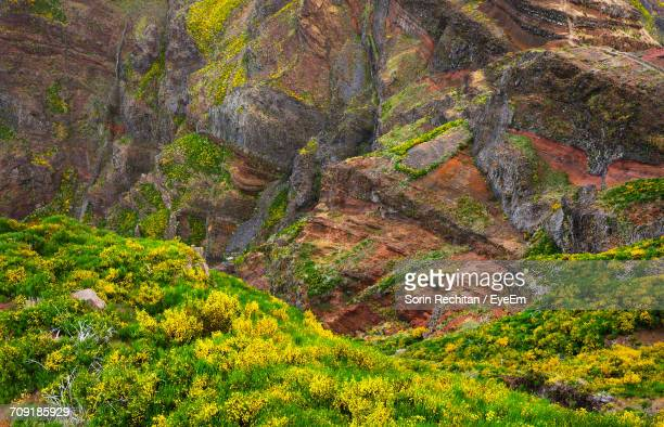 High Angle View Of Plants Growing On Rocky Mountains