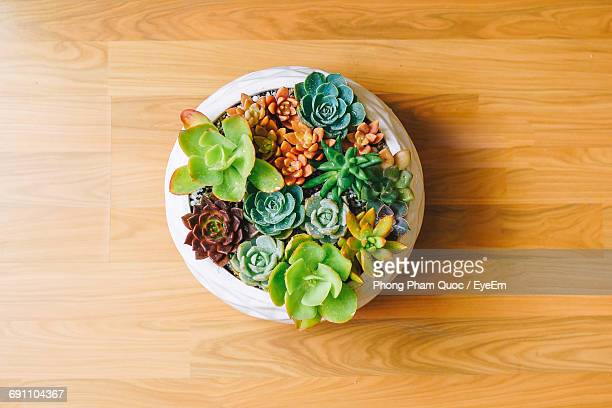 High Angle View Of Plants In Bowl