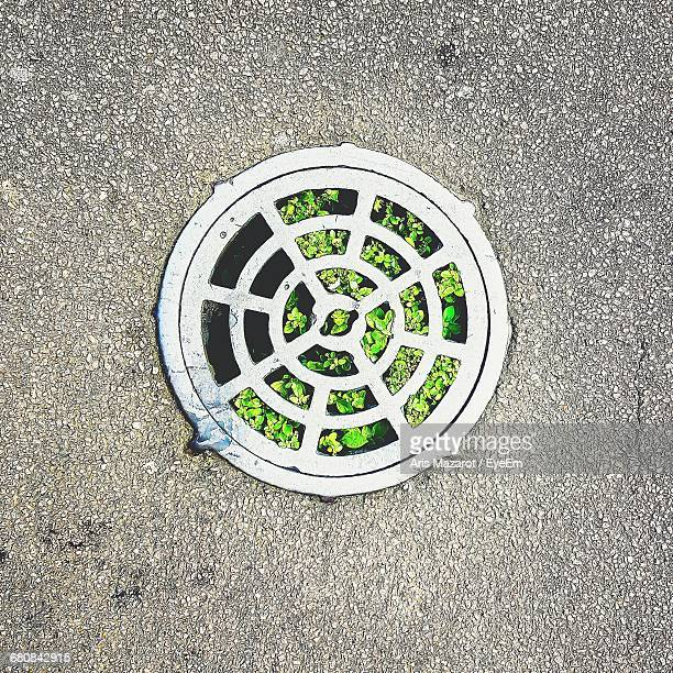 High Angle View Of Plants In Sewer On Street