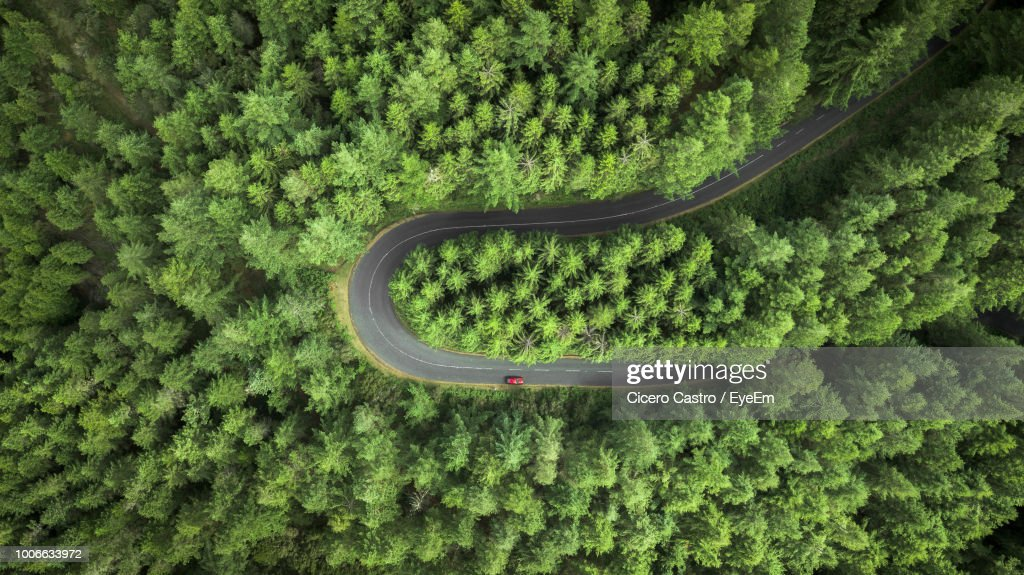 High Angle View Of Plants On Road Amidst Trees : Stock Photo