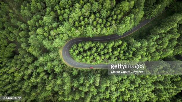 high angle view of plants on road amidst trees - lareira stock pictures, royalty-free photos & images