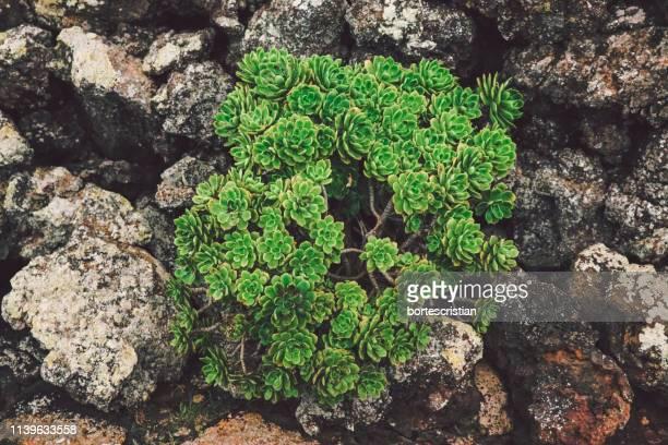 high angle view of plants on rocks - bortes photos et images de collection