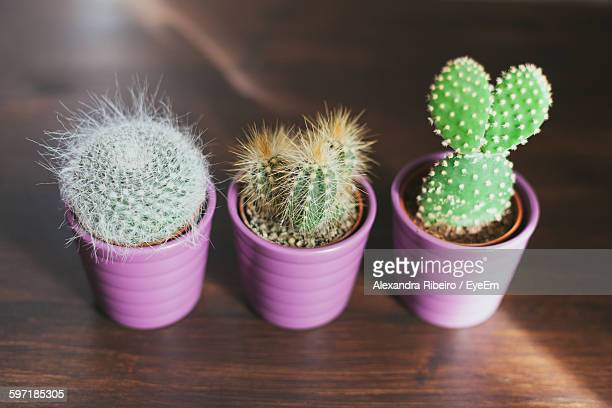 High Angle View Of Potted Cactus On Hardwood Floor
