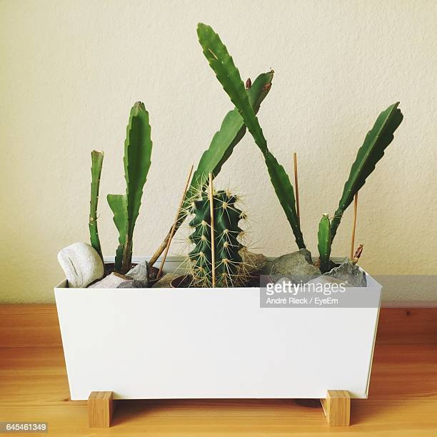 High Angle View Of Potted Cactus Plants On Floorboard Against Wall