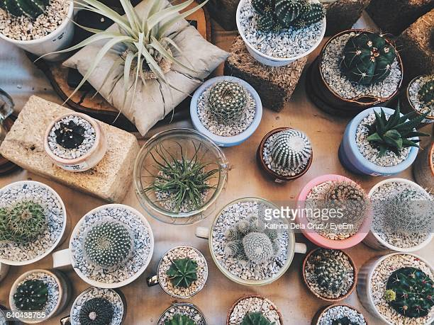 High Angle View Of Potted Cactuses On Table