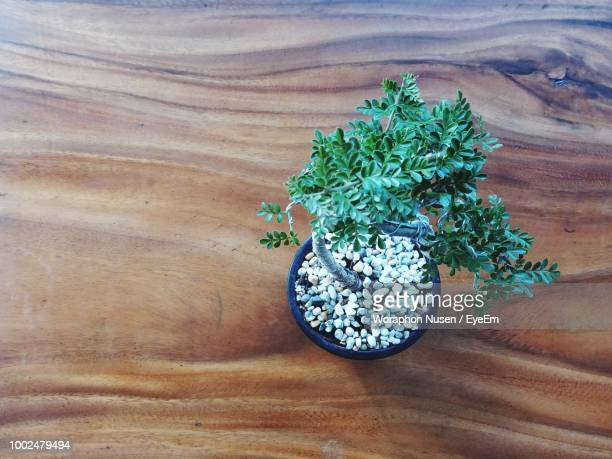 high angle view of potted herb on hardwood floor - bonsai tree stock pictures, royalty-free photos & images