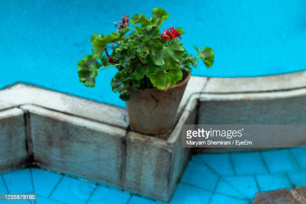 high angle view of potted plant by swimming pool - blue angels stock pictures, royalty-free photos & images
