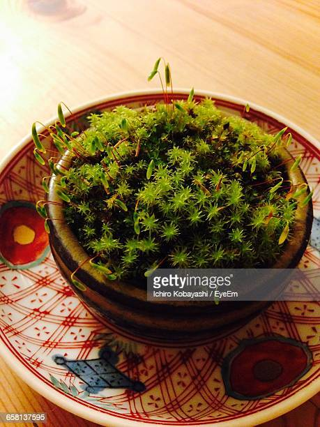high angle view of potted plant in plate on table - 吹田市 ストックフォトと画像
