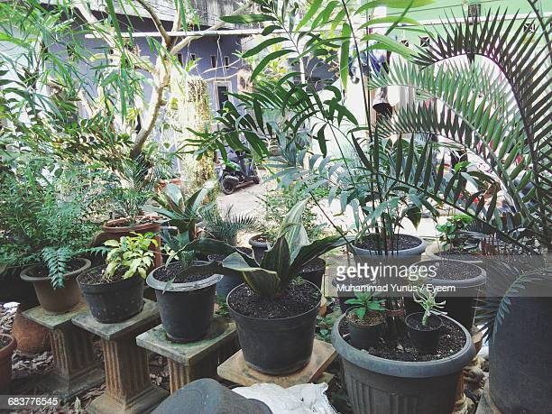 High Angle View Of Potted Plants At Botanical Garden