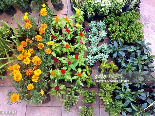 High Angle View Of Potted Plants On Pavement For Sale