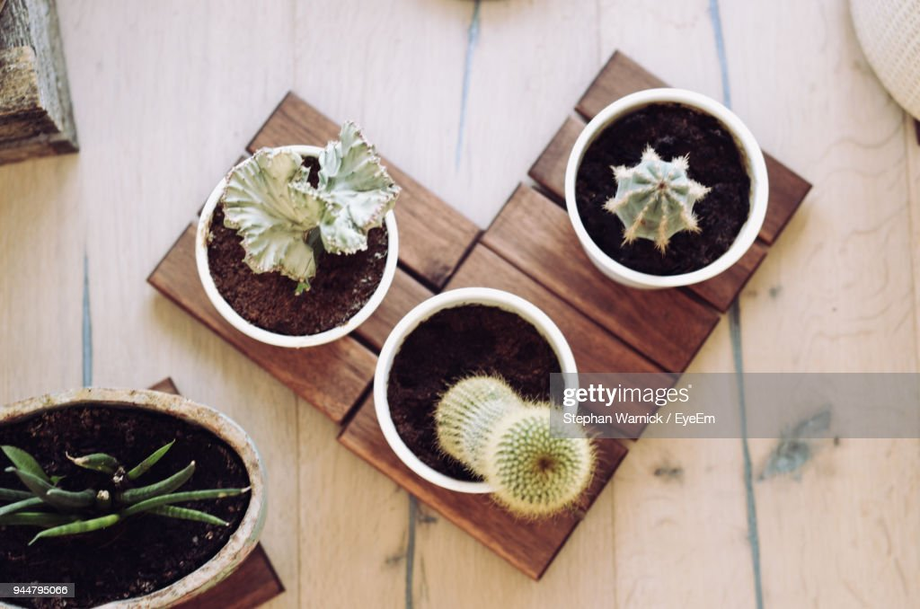 High Angle View Of Potted Plants On Table : Stock Photo