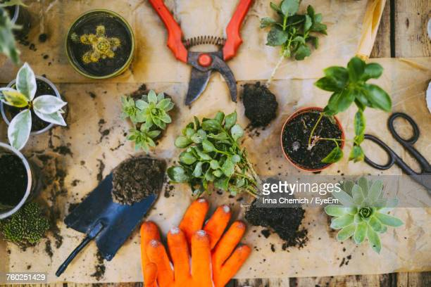 high angle view of potted plants - tuinieren stockfoto's en -beelden