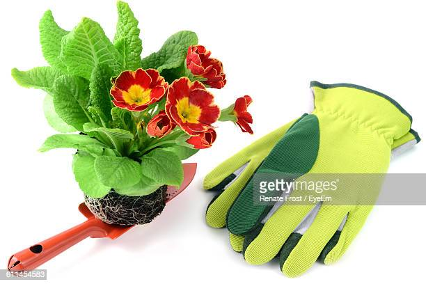 high angle view of potted red primula flowerwith gardening gloves and shovel on white background - gardening equipment stock pictures, royalty-free photos & images