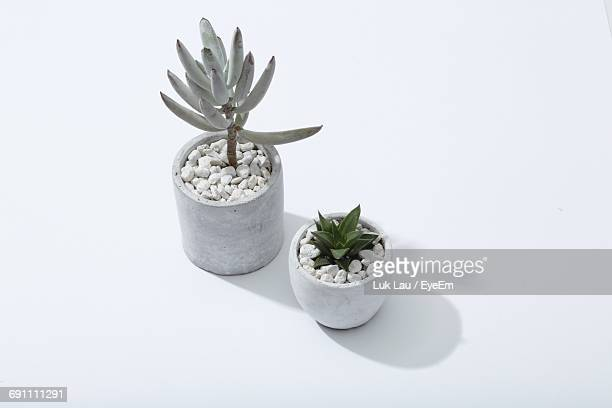 High Angle View Of Potted Succulent Plants On White Background