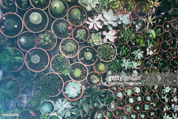 High angle view of potted succulent plants