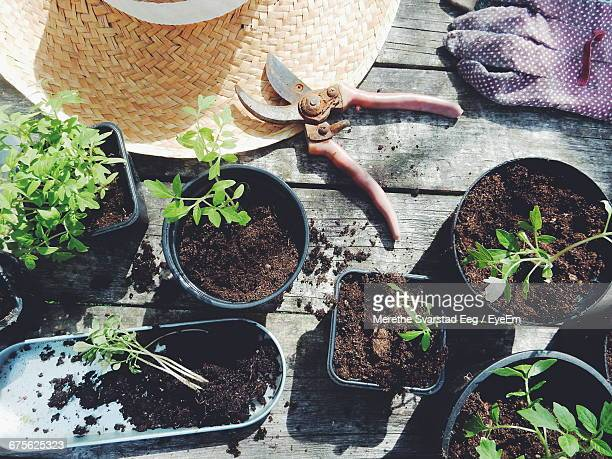 High Angle View Of Pruning Shears And Glove By Potted Plants