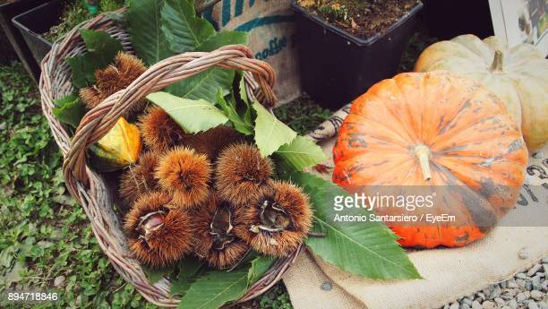 High Angle View Of Pumpkins And Chestnuts