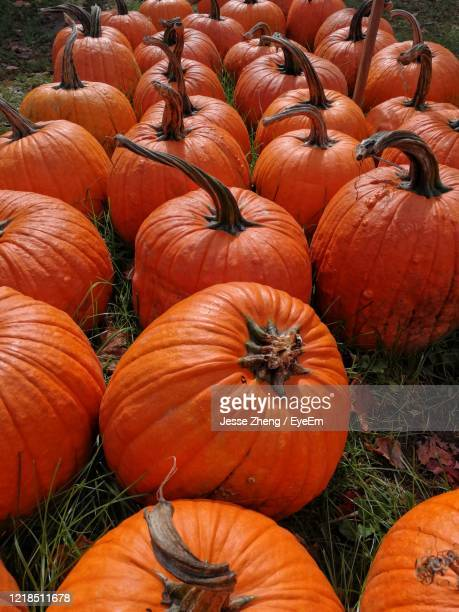 high angle view of pumpkins for sale at market - jesse stock pictures, royalty-free photos & images