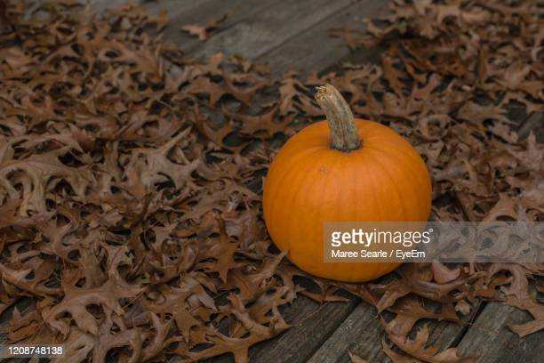 high angle view of pumpkins on dry leaves - cambridge new zealand stock pictures, royalty-free photos & images
