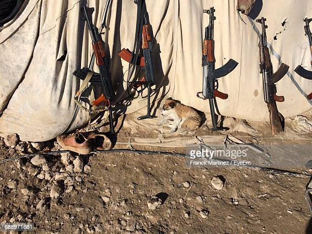 High Angle View Of Puppy Sleeping By Ak-47 On Sunny Day