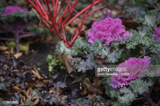High Angle View Of Purple Flowering Plant On Field