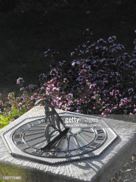 high angle view of purple flowering plants in garden and a sundial - alexandra dost stock-fotos und bilder