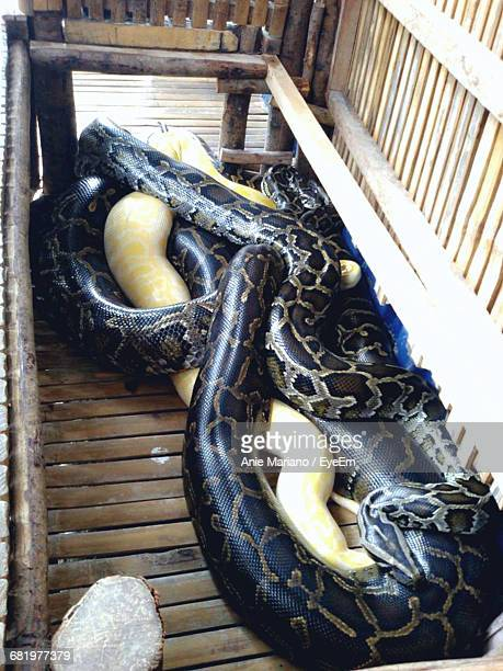 high angle view of pythons in wooden container - yellow burmese python stock pictures, royalty-free photos & images