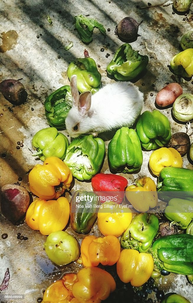 High Angle View Of Rabbit And Bell Peppers On Floor : Stock Photo