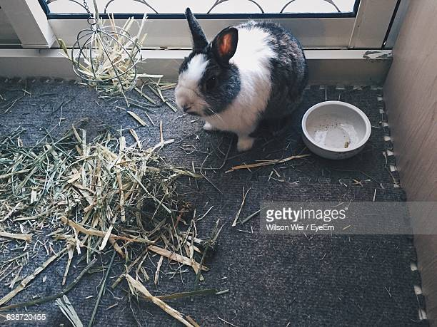 High Angle View Of Rabbit In Cage