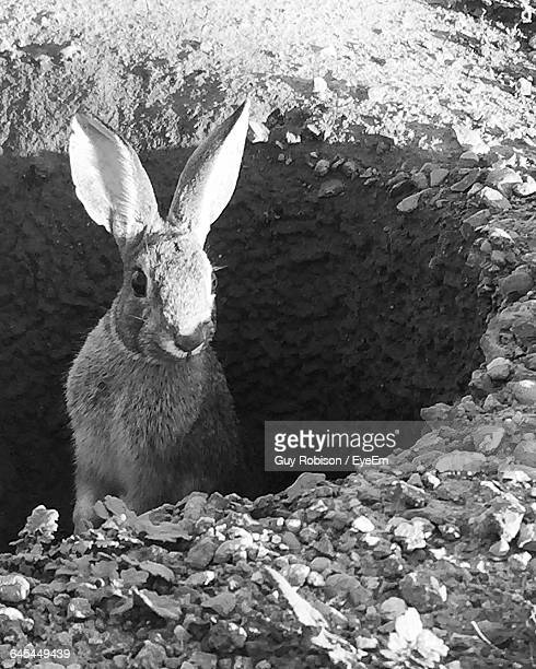 High Angle View Of Rabbit In Hole