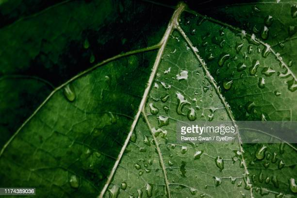 high angle view of raindrops on leaves - natural condition stock pictures, royalty-free photos & images