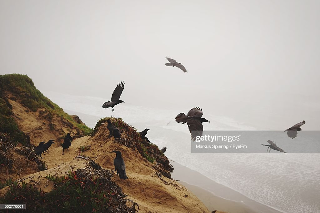 High Angle View Of Ravens Over Sea Against Sky : Stock Photo